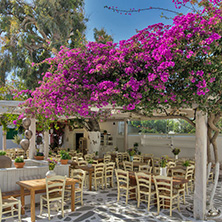 Restaurant with flowers on the island of Mykonos, Cyclades Islands